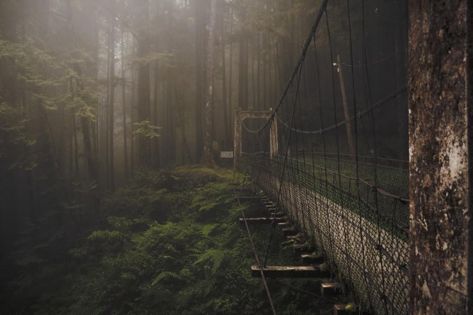 Лесной мост, горы Алишань, Тайвань