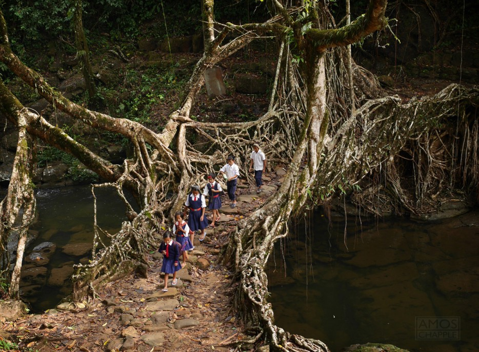2. Мост из корней деревьев, Индия
